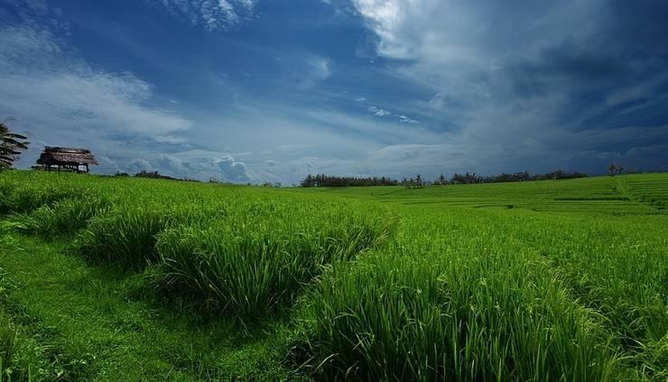 Soka Indah Bali - Sawahnya