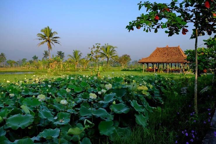 Puri Menoreh Hotel Magelang - Bunga Teratai, pemandangan sisi kanan hotel