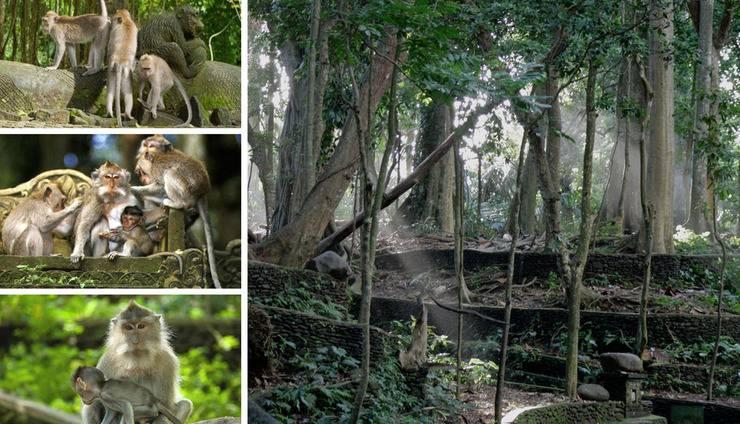 Ubud Green Ubud - Monkey Forest