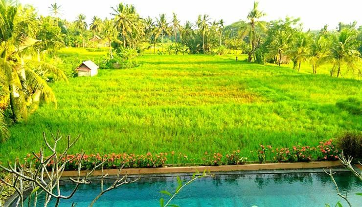 Inata Bisma Bali - Rice Field View
