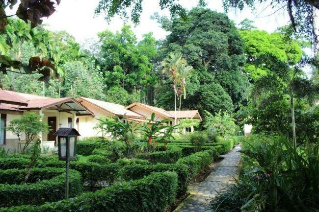 NIDA Rooms Sumatera Bukit Lawang Semporna - Taman
