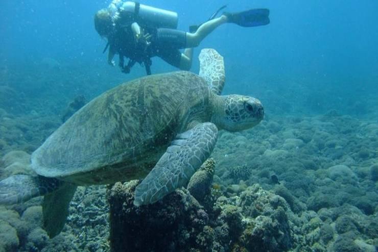 Ricel Homestay Lombok - Snorkelling