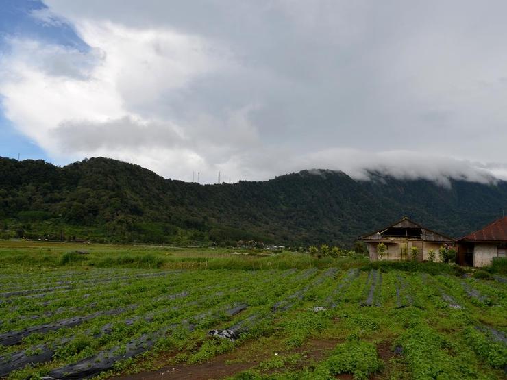 Dajan Buyan Homestay Bali - View