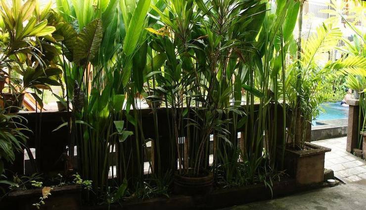 Waringin Homestay Bali - pemandangan