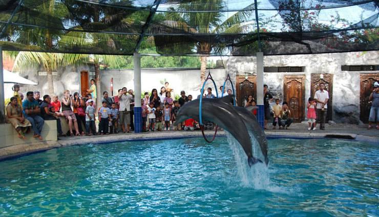 Melka Excelsior Hotel Bali - Dolphin Show