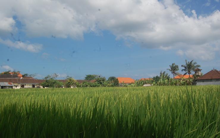 Dhyanapura City Hotel Bali - Pemandangan Sekitar