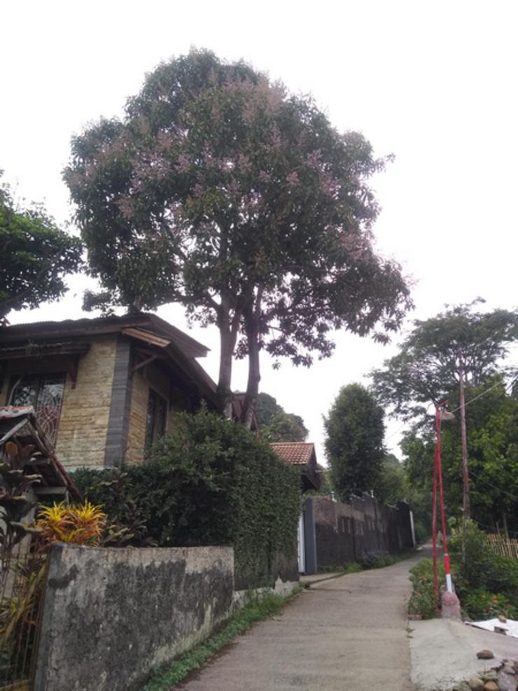 Dkiarahouse Bogor - Facade