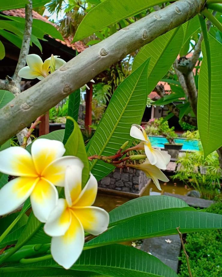Villa Aquin Solo - Garden