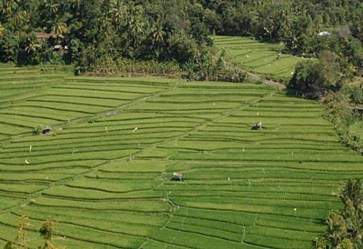 Aditya Home Stay Bali - Pemandangan