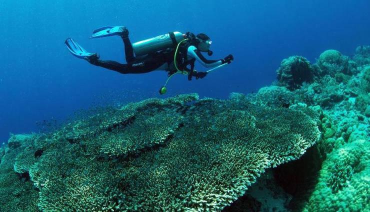 Murex Dive Resorts Manado Manado - Activity