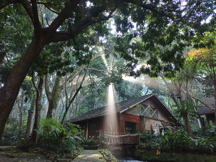 Imah Seniman Bandung - suite forest view