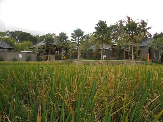 Umae Villa Bali - pemandangan
