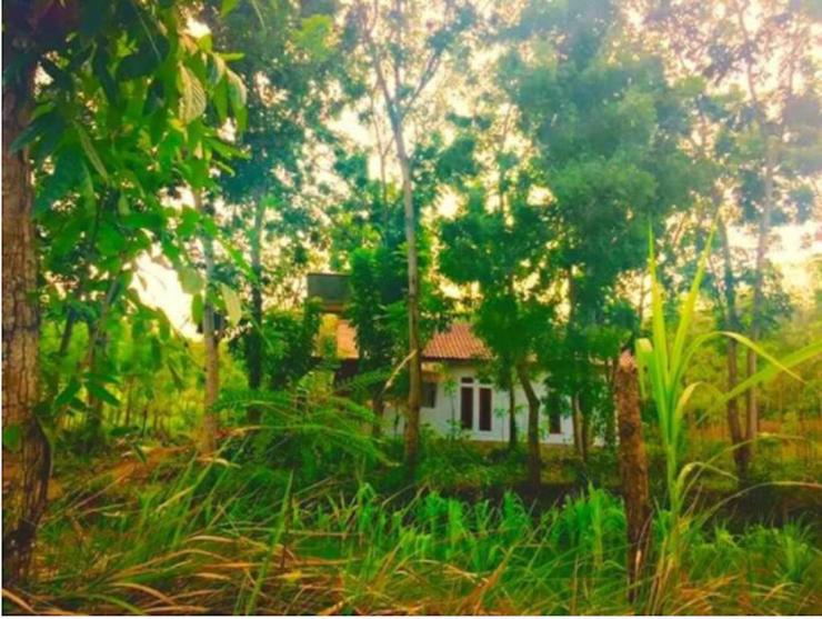 Rimba Bungalow Lombok - APPEARANCE