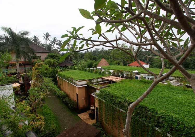 Ubud Green Ubud - Pemandangan