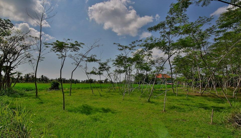 Taman Harum Cottages Bali - SAWAH