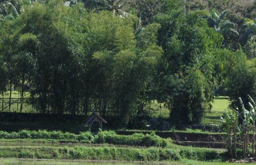 Lotus 2 Homestay Magelang - Pemandangan