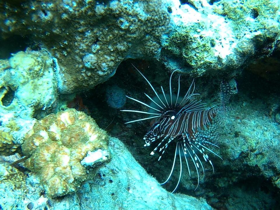Wakatobi Patuno Resort Wangi-wangi - Suite Room + Diving Package 6D5N Regular Plan