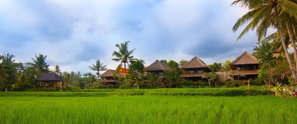 Agung Raka  Ubud - Pemandangan sawah