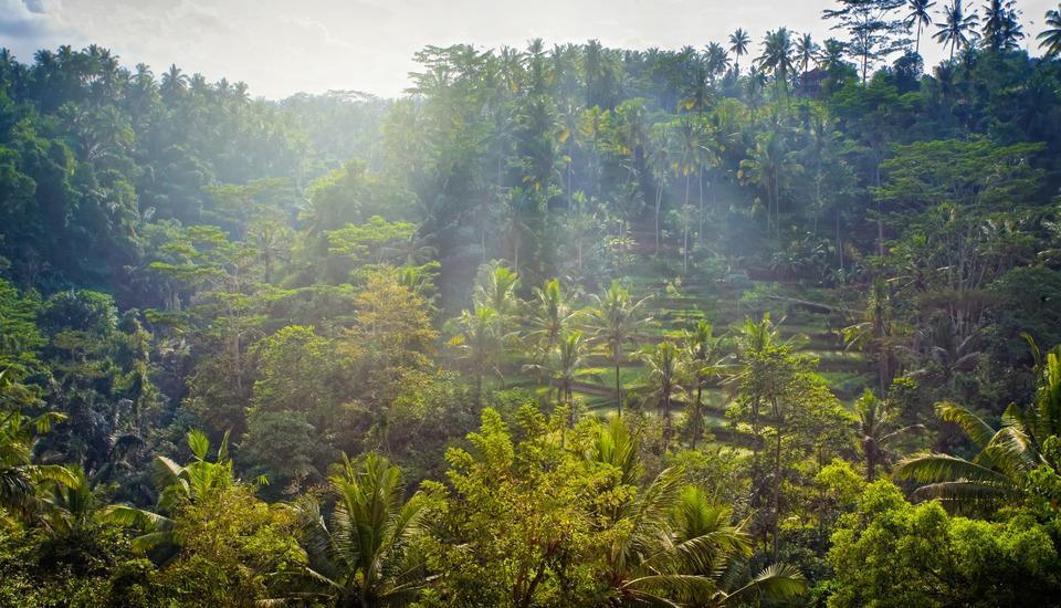 Jannata Resort & Spa Ubud - view