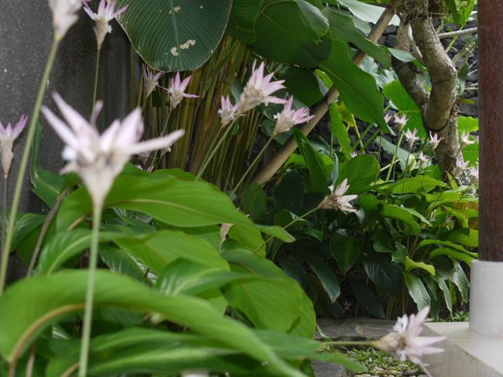 Rumah Dadong Bali - Garden