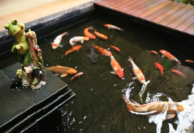 RedDoorz Menteng Jakarta - Kolam ikan