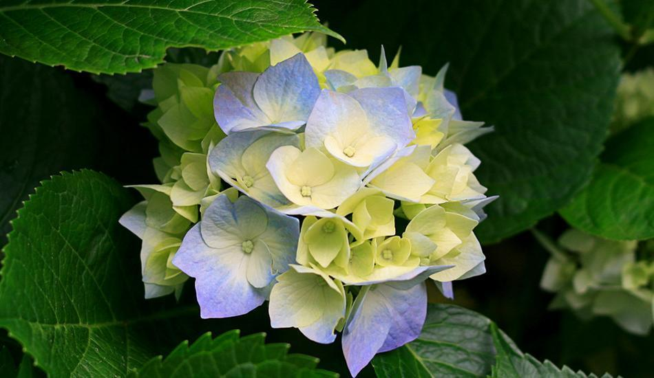 Yulia 1 Homestay Bali - flower