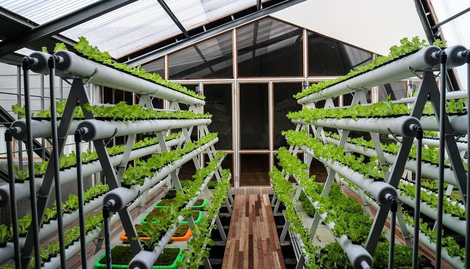 Greenhost Hotel Jogja - Hydroponic Farming