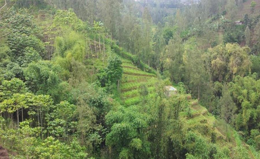 Hotel Huni Raya Bromo Pasuruan - Pegunungan