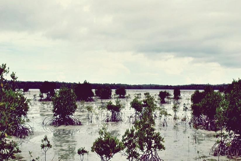 Arys Lagoon Karimunjawa Jawa Tengah - Mangrove