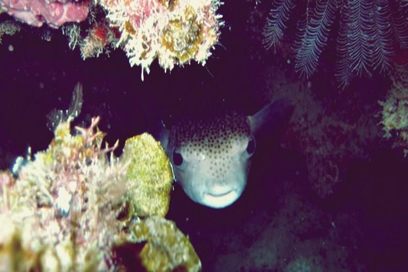 Arys Lagoon Karimunjawa Jawa Tengah - Pemandangan di dalam laut