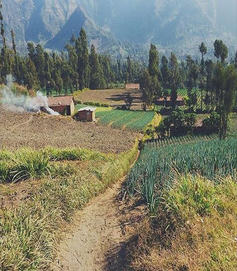 Homestay Ngadisari Permai Bromo - Surroundings