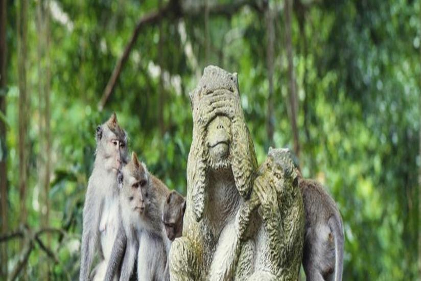 Adi Jaya Cottages Bali - Lingkungan Sekitar