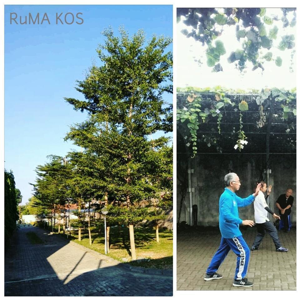 RuMA KOS Yogyakarta - backyard