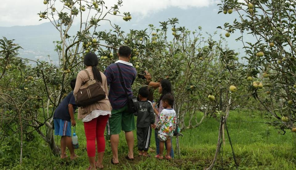 Kusuma Agrowisata Batu - Agrowisata Petik Buah