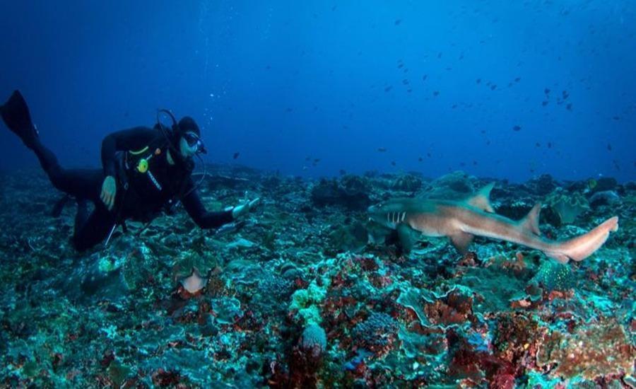 Menjangan Dynasty Resort Bali - Menyelam