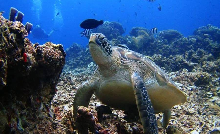 Rinjani Beach Eco Resort Lombok - Pemandangan laut