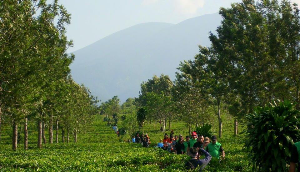 Selabintana Resort Sukabumi - teawalk