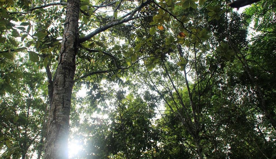 Hotel Bukit Indah Lestari Baturaja - pepohonan di sekitar hotel