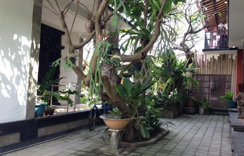 Double N Guest House Bali - pemandangan