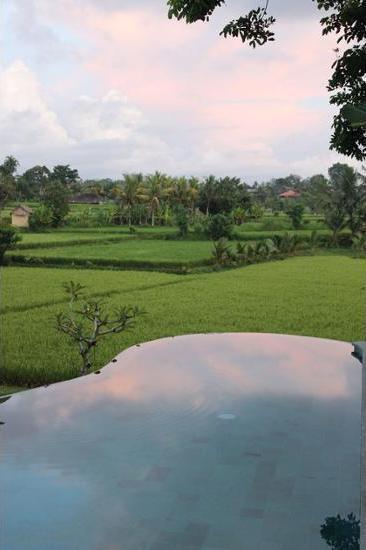 Ubud Padi Villas Bali - Lake