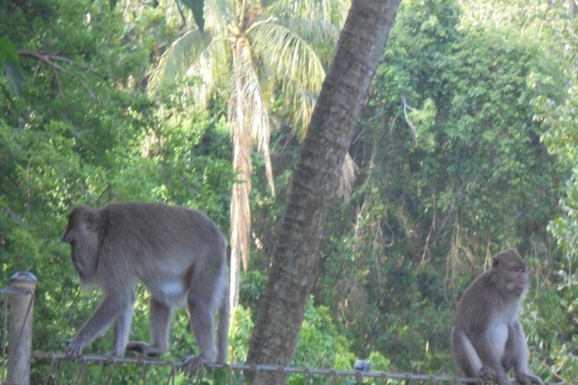 Umae Villa Bali - Lingkungan Sekitar