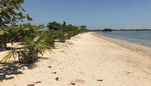 Coconut Lodge Jepara - Beach