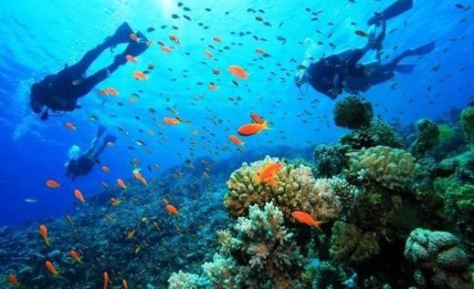 Pelangi Lake Resort & Hotel Belitung Belitung - Menyelam