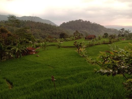 De salak Homestay Bogor - View