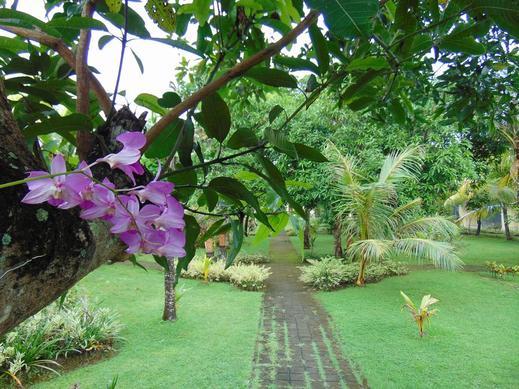 Livingwell Inn Bali - garden