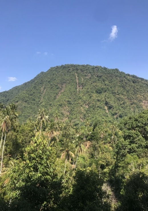Sekumpul BnB Bali - View