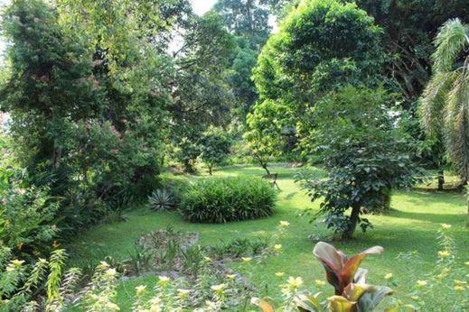 Ecolodge Bukit Lawang Langkat - Facilities