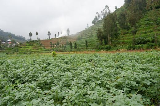 RedDoorz @ Gerbang Dieng Plateau Area Wonosobo - Photo