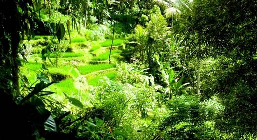 Alam Sari Keliki Bali -