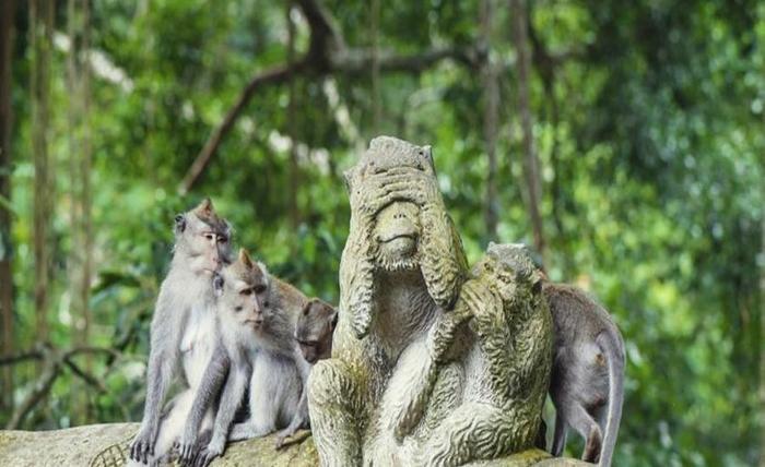 The Evitel Resort Ubud Bali - Hutan Monyet
